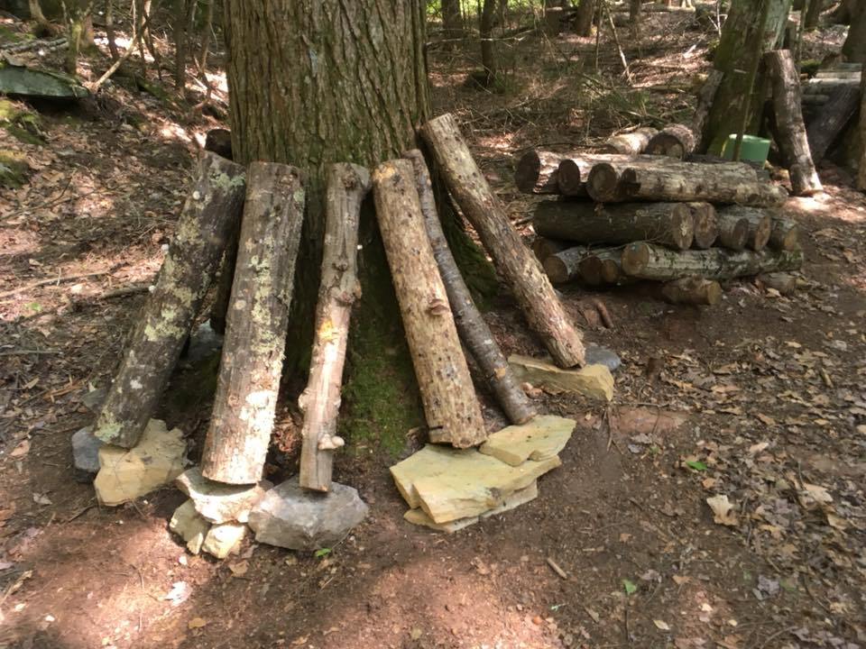 standing logs on rocks